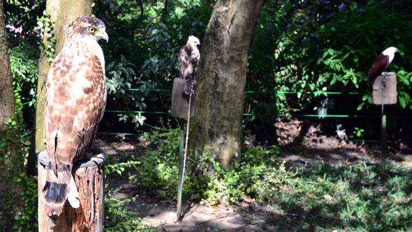 Crocodile park Davao Owl