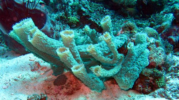 Spiky sponge